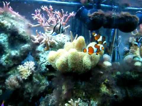 Aquarium r cifal eau de mer juwel lido 120 l 15 mois for Aquarium eau de mer