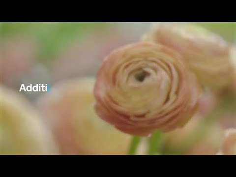 How to use Square Terminal