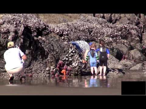 Cannon Beach Oregon -  Haystack Rock  - YouTube