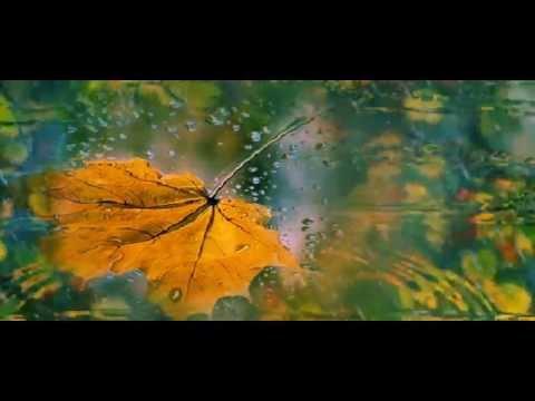Пісня Цей листопад - Українська пісня