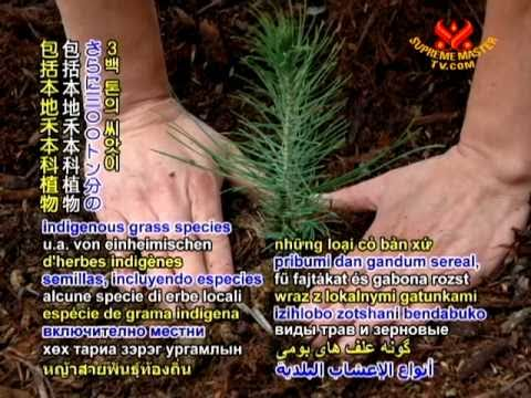 ENVIRONMENTAL NEWS -  One million trees to be hand  planted on Lower Lakes