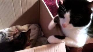 Кот переживает рождение котят