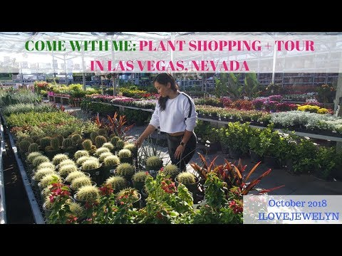 Come with me: Plant shopping + tour | Garden Center | Las Vegas | October 2018 | ILOVEJEWELYN