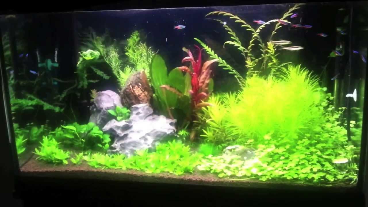 Freshwater Planted Aquarium 120l Acvariu Plantat 120l