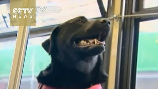 Watch: Dog in Seattle catches bus, walks herself at park