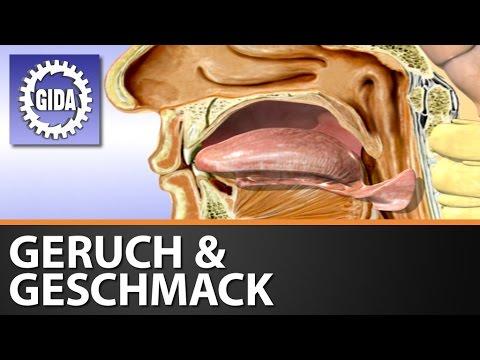 GIDA - Geruch & Geschmack - Die chemischen Sinne - Biologie - Schulfilm - DVD (Trailer)