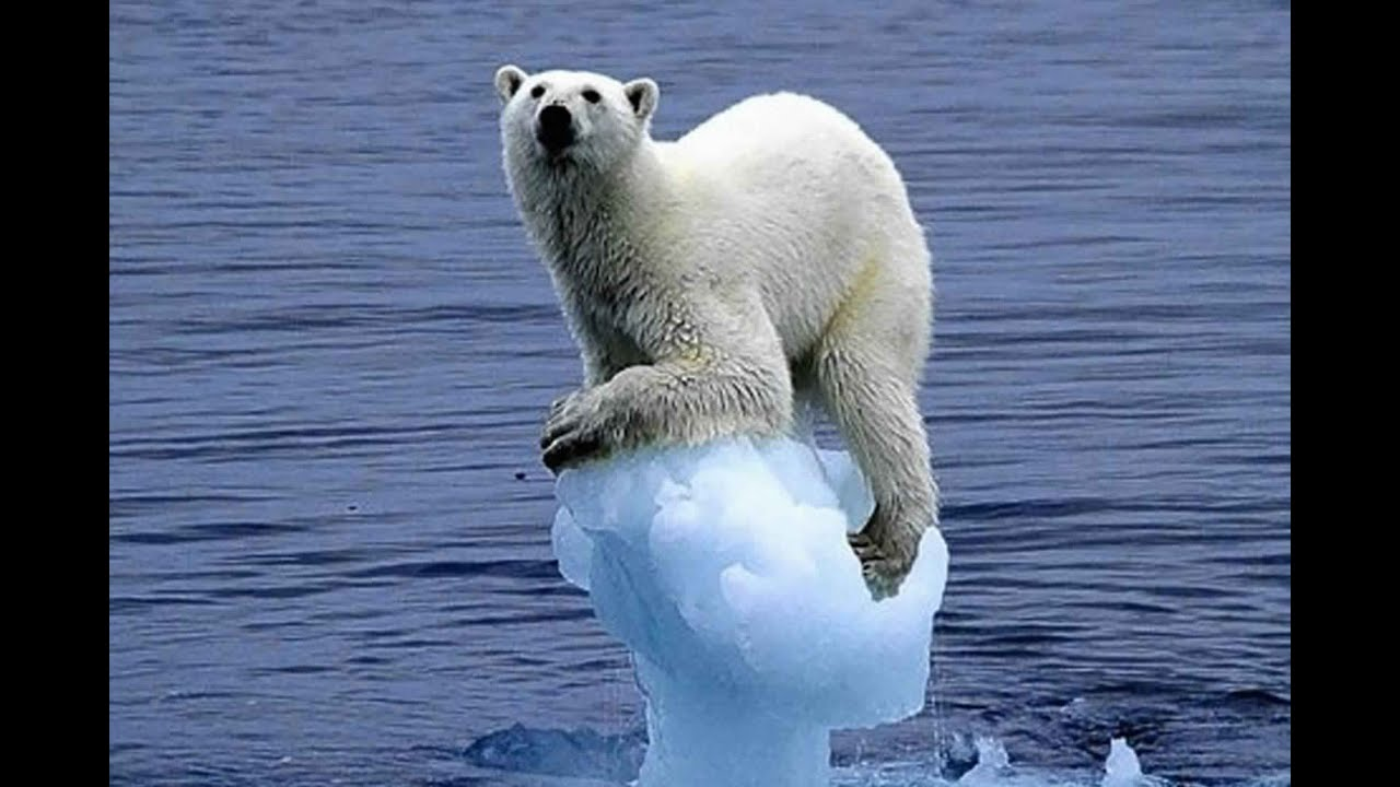 Image result for antarctic polar bears
