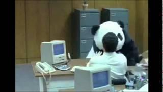 [Fandub] Never say no to panda 1 ~ Nunca le digas no al panda (Español Latino)