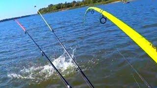 рыбалка осенью 2019 ловля крупного сазана на Дону