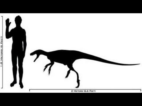 Micropachycephalosaurus | Enciclopedia sobre Dinosaurios