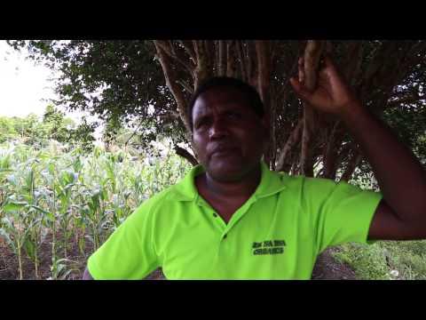 Zai na Tina Organic Farm, Solomon Islands