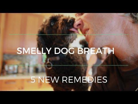 Smelly Dog Breath: 5 NEW Remedies