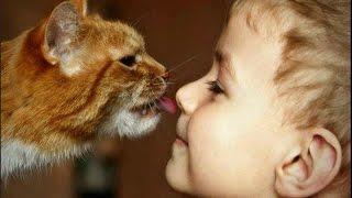 Видео приколы про кошек! Кошки и детки! Подборка№1!