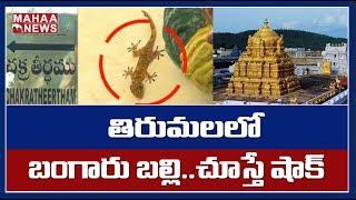 తిరుమలలో ప్రత్యక్షమైన బంగారు బల్లి.. బారులు తీరిన భక్తులు : Golden Lizard Found In Tirumala