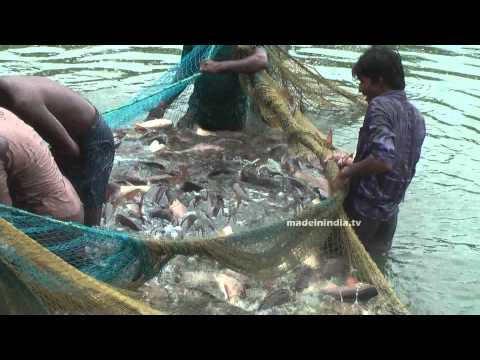 Fishing In Indian River | Fishing With Nets | Fishing Videos In India