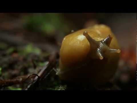 Banana Slugs Unpeeled: Science on the SPOT