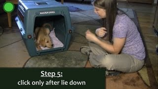 Puppy Crate Training With The Clicker