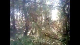 гониво, мужик в лесу,  Russian guy in the woods