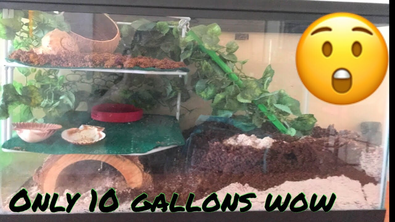 Hermit Crab 10 Gallon Tank Set Up Turned Into 3 Stories Youtube