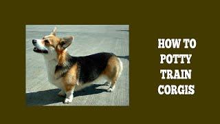 How To Quickly Potty Train Corgis