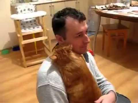 Chú mèo đáng yêu ôm lấy ôm để chủ mình không thôi