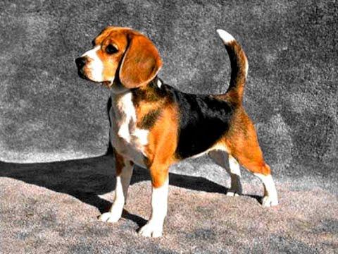 Souvent chien de garde taille moyenne - YouTube WB18