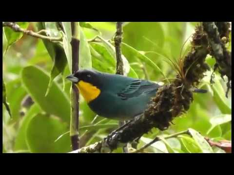 Colombia Birds and Wildlife