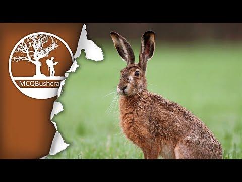 Bushcraft Field Dressing Brown Hare