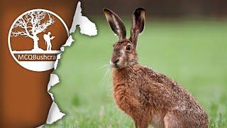 MCQBushcraft Field Dressing Brown Hare