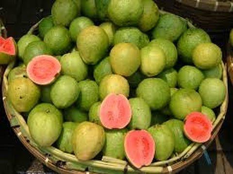 How to Grow Guava - English CC - Como Cultivar Guayaba - TvAgro por Juan Gonzalo Angel
