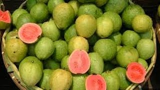 How to Grow Guava - English CC - Como Cultivar Guayaba - TvAgro por Juan Gonzalo Angel