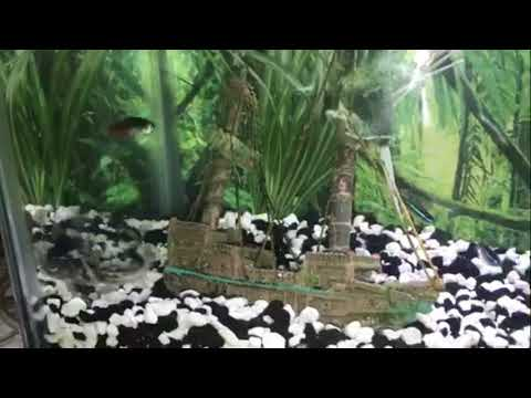 New Pet Fish Review Neon Tetras And Pictus Catfish
