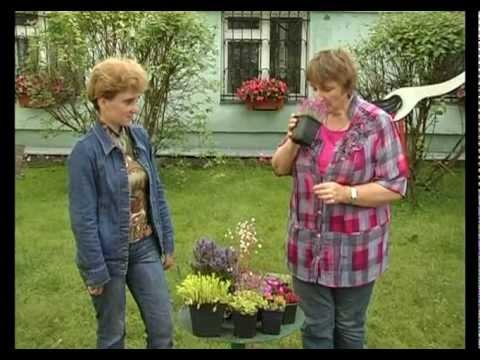 Сад и огород. Почвопокровные растения.
