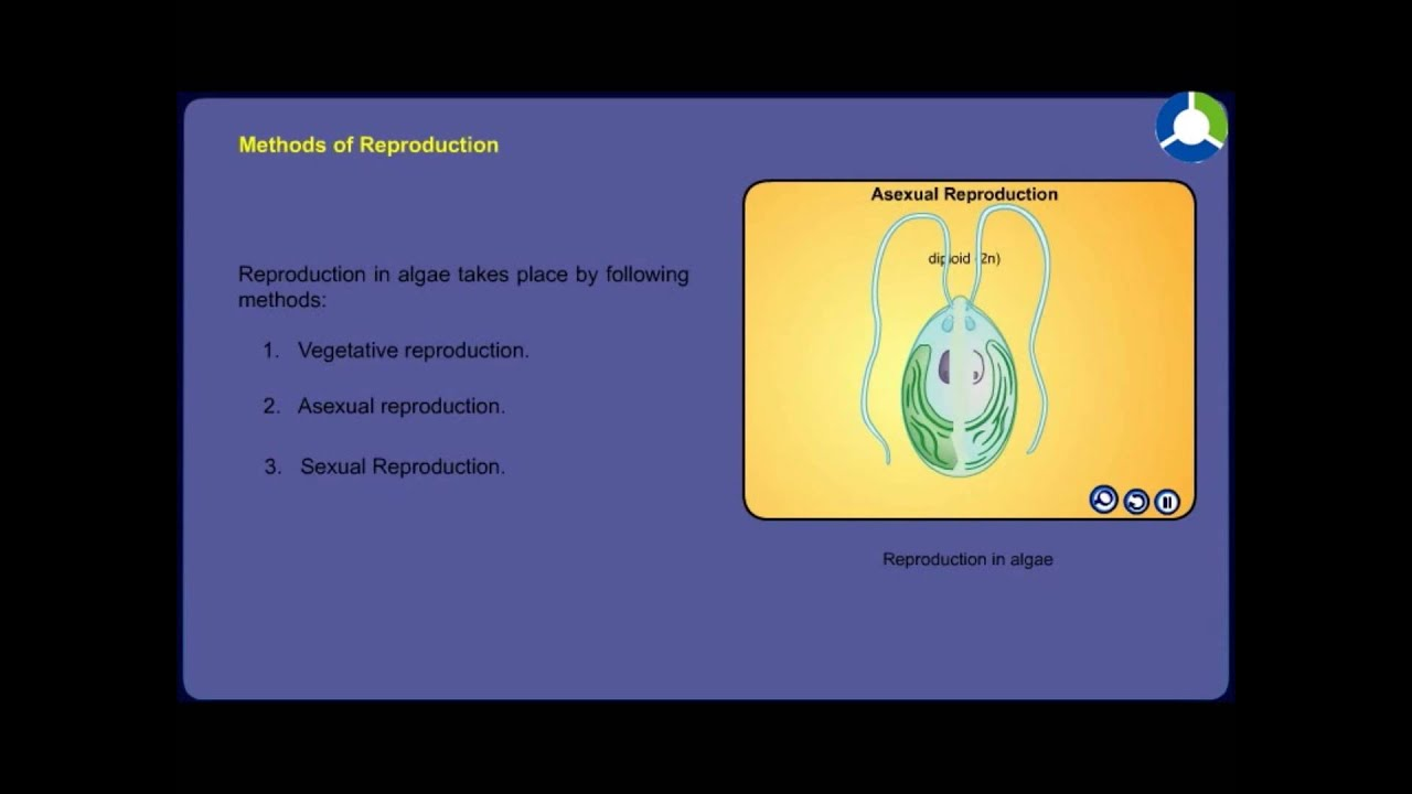 Asexual reproduction personalization