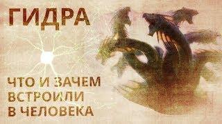 ГИДPА. ч.1 Лимфа, грибы, энергетические паpaзиты