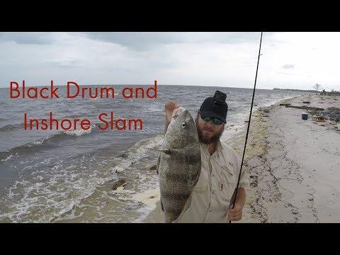 Black Drum And Inshore Slam In Port St  Joe Fl