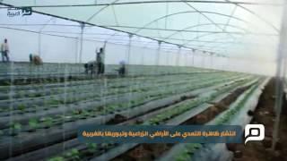 بالفيديو| قاعات الأفراح والكافتريات سرطان يدمر الرقعة الزراعية بالغربية