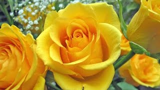 Johnny Desmond-The Yellow Rose of Texas