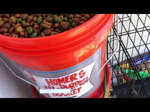 DIY self-filling dog food feeder and automatic watering sys