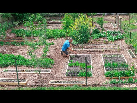 What Happens When You INTERPLANT Fruits and Vegetables in the Same Garden?