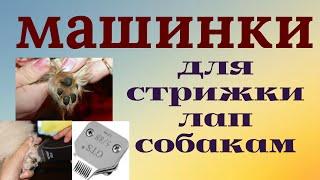 Груминг: стрижка #лап собак под машинку