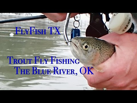 Trout Fly Fishing The Blue River Oklahoma