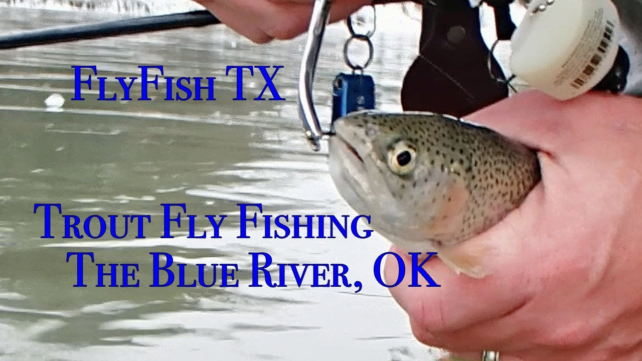 Trout fly fishing the blue river oklahoma youtube for Trout fishing oklahoma