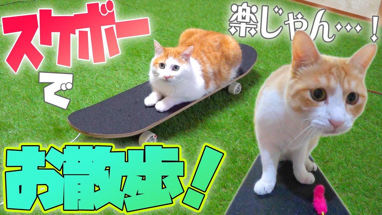 最近の猫たちはスケボーでお散歩をするらしい