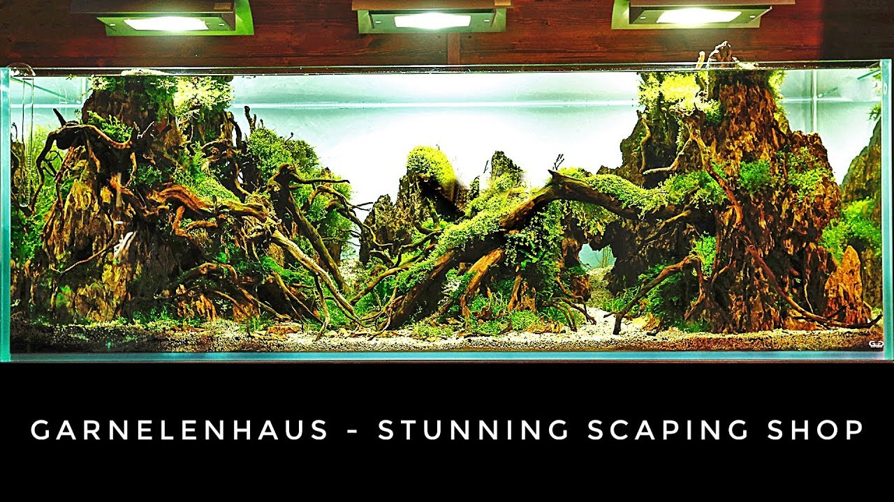 Garnelenhaus - STUNNING Aquascaping and SHRIMP Shop - YouTube