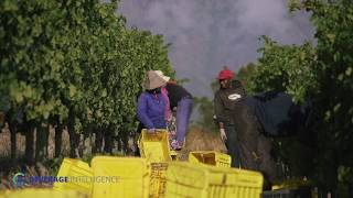 L'Ormarins   Masterclass   Vineyard Management