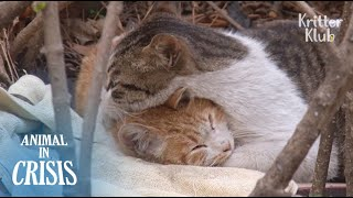 Stray Cat Protects His Sick Friend With Disabled Legs From Danger (Part 1) | Animal in Crisis EP103