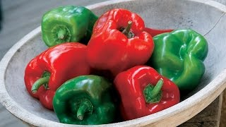 Planting and Growing Peppers