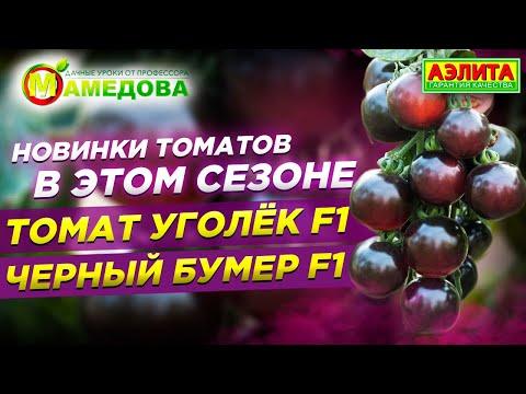 Чёрные томаты. Новинки Томатов в Этом Сезоне. Томат Уголёк F1. Томат Черный Бумер