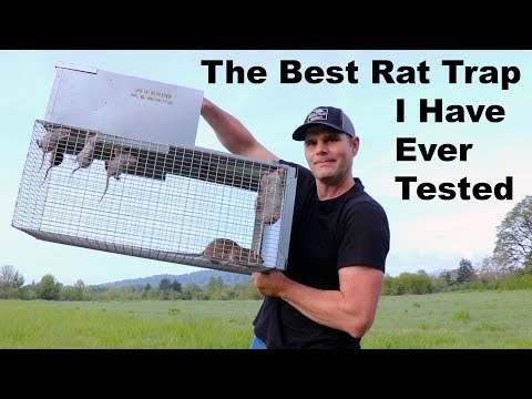 The Best Rat Trap I Have Ever Tested. The Uhlik Repeater Trap. Mousetrap Monday.